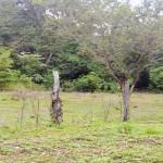 La Hierba Land for sale