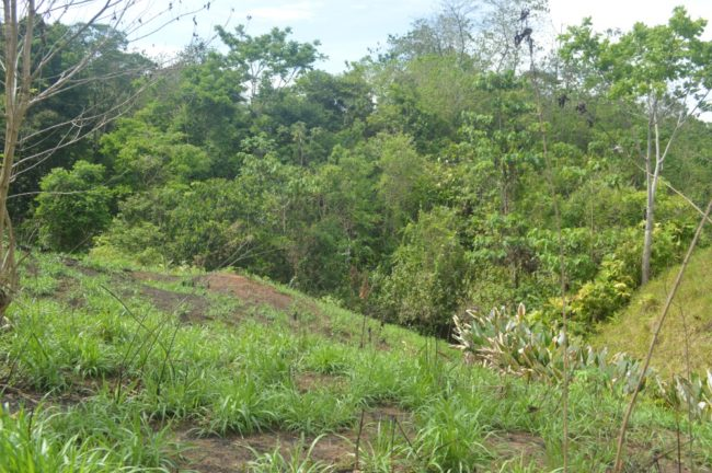 Raw land for sale Costa Rica