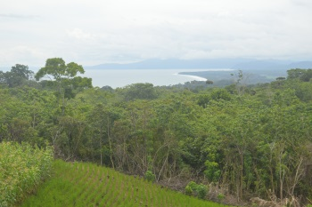 Large property for sale near Pavones