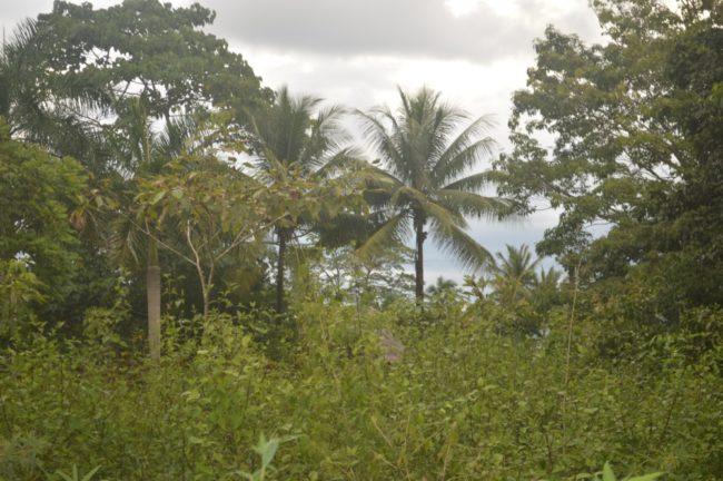 Pavones titled land