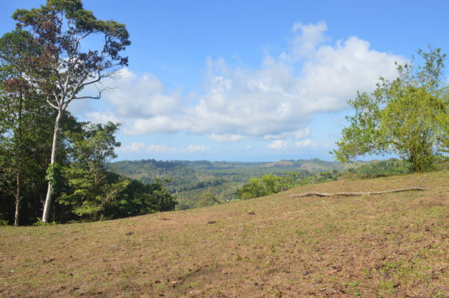 Golfito's Beautiful New Land For Sale.